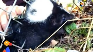 People Find Skunk Stuck in Fence | The Dodo