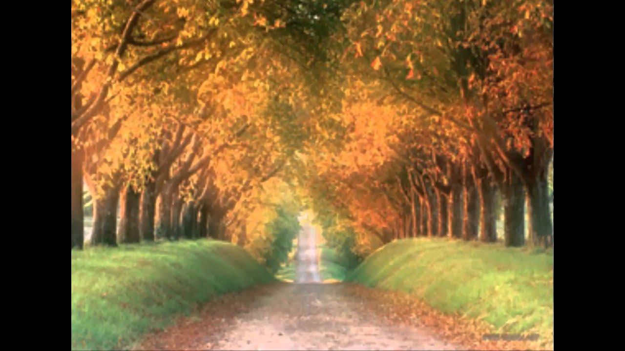Los caminos con árboles florales más hermosos - YouTube