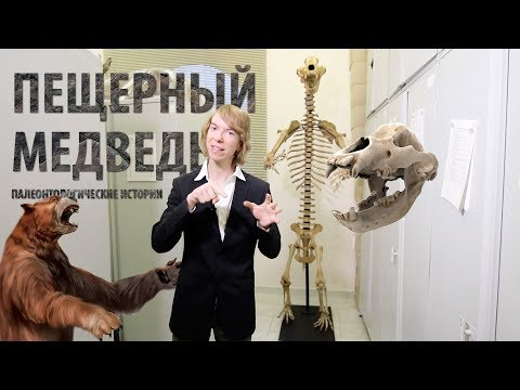Жизнь и смерть пещерного медведя. Ярослав Попов | Палеонтологические истории #014