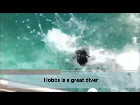 Cessna Hydrotherapy Youtube