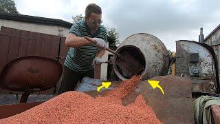 Zaprawianie pszenicy do siewu