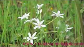 Azhalerum Jeevitha Maruvil Malayalam Christian Song