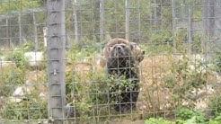 Kiteen Eläintarha