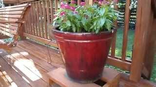 Planting My Large Ceramic Planter Pots