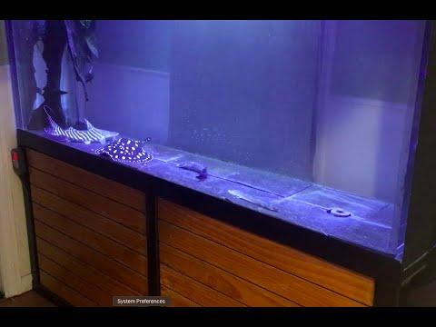 350 Gallon Acrylic Aquarium FOR SALE! See Description