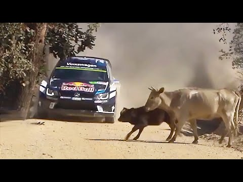20 FUNNIEST RALLY