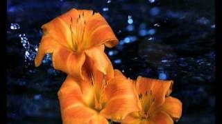 КАПЛИ ВДОХНОВЕНИЯ ПОД МУЗЫКУ ШРИ ЧИНМОЯ.avi(РЕЛАКС ДЛЯ ВСЕХ, РАСПУСКАЮЩИЕСЯ ЦВЕТЫ ПОД МУЗЫКУ ШРИ ЧИНМОЯ, ПОКОЙ, КРАСОТА И РАДОСТЬ., 2011-04-07T09:34:38.000Z)