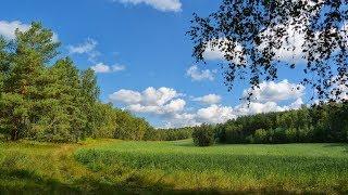 Леса и поля Музыка Сергея Чекалина Forests And Fields Music Sergei Chekalin
