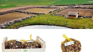 Hodowla Ślimaków /  100 ton ślimaka w obrocie - chłodnia SNAILS GARDEN