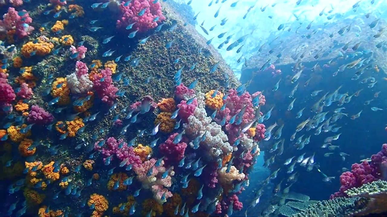 延岡の海@サンゴと魚の楽園 - YouTube