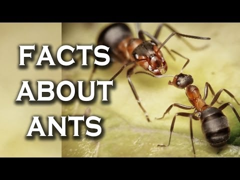 Top 10 Awesome Facts You Didn't Know About Ants