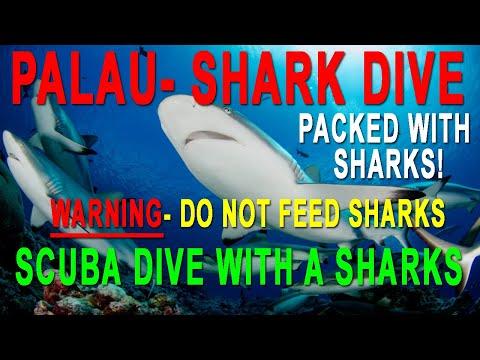 Shark Dive Palau Blue Corner with Oahu Diving