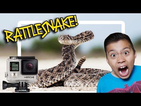 RATTLESNAKE BIT MY GOPRO!!!