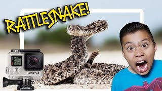 rattlesnake bit my gopro