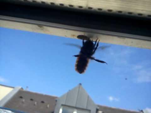 Favorit Die Biene wohnt im Fensterrahmen! - YouTube XB75