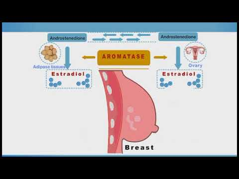 Breast Cancer Chemotherapy Animation: Tamoxifen