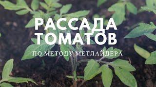 Рассада томатов по методу Митлайдера(Метод Митлайдера! Как помочь сеянцем (рассаде) томатов, пережить время до высадки в грунт. Рассада будет..., 2016-03-09T07:02:35.000Z)