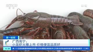 [第一时间]广西南宁:小龙虾火爆上市 价格便宜品质好| CCTV财经 - YouTube