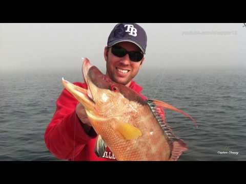 How To Catch Hogfish 101 - Pt. 1 Introduction