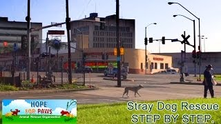 Stray dog rescue  step by step.