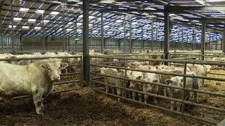 Accord UE-Mercosur: les agriculteurs européens inquiets