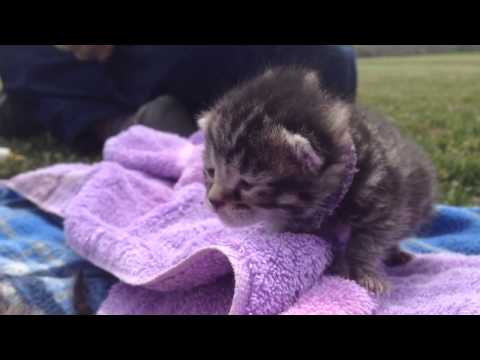 cute kittens - only 9 days old