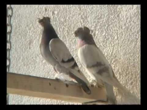 Кадры из фильма смотреть видео бойные голуби