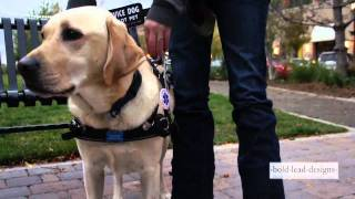 Bold Lead Designs' MOBILITY SUPPORT HARNESS for Service/Assistance Dogs