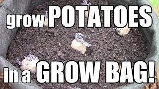 How to Grow Potatoes in Grow Bags, Pots, & Containers (The OYR Way)
