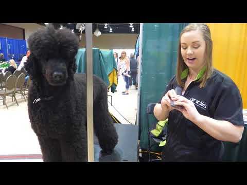 Clipping Poodle Feet with Annie Williams