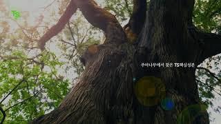 TS샴푸 TS비디샴푸 '주아나무에서 찾은 TS의…
