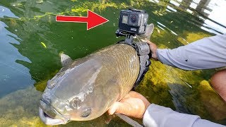 I Strapped a GoPro on a Fish