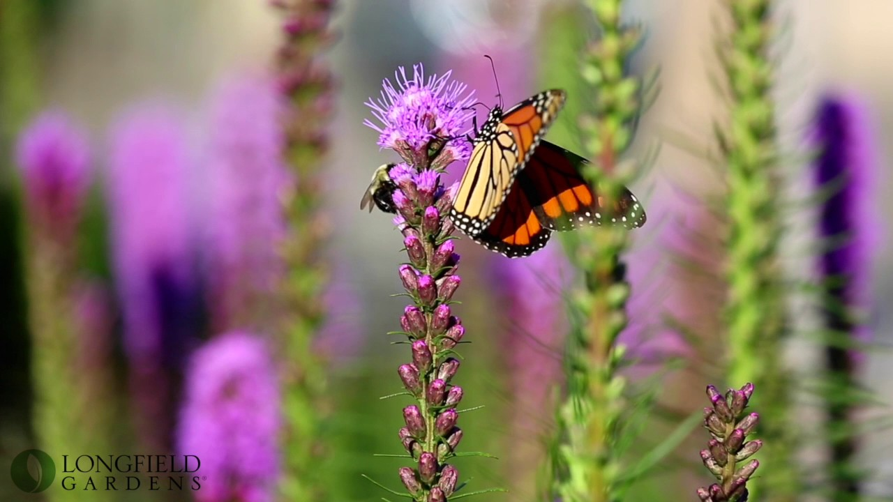 Summer Flowers That Attract Butterflies - YouTube