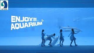 「TEAM SHACHI 」が名古屋港水族館とコラボしました。TEAM SHACHI が名...