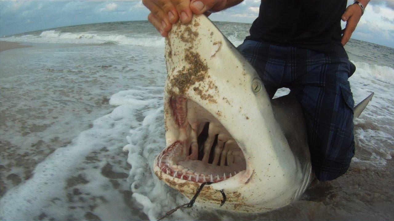 Mullet run shark fishing youtube for Eating mullet fish