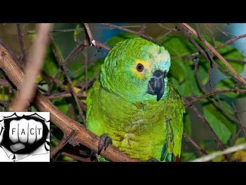 Top 10 Most Beautiful Birds Of Amazon Rainforest