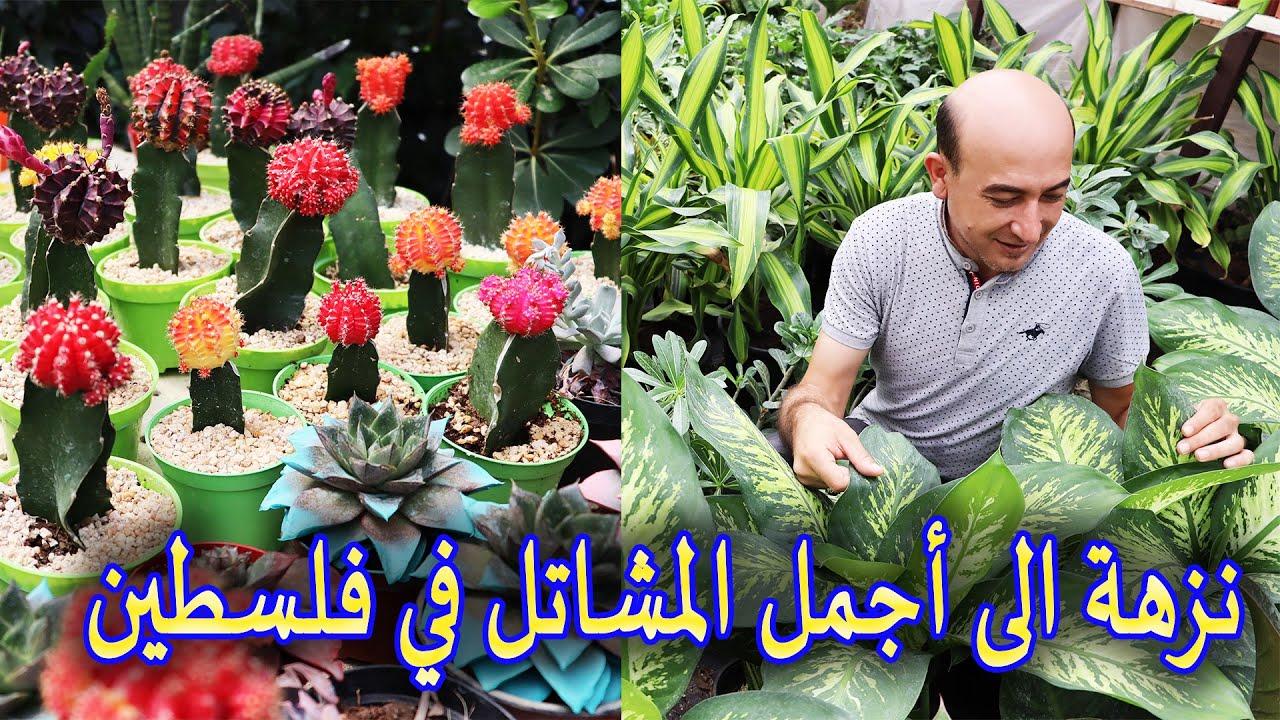 نزهة الى أجمل المشاتل في فلسطين و نباتات نادرة