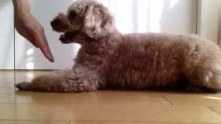 クリッカーを使った犬のしつけ → http://gaditto.com (withDogs) のHPを...
