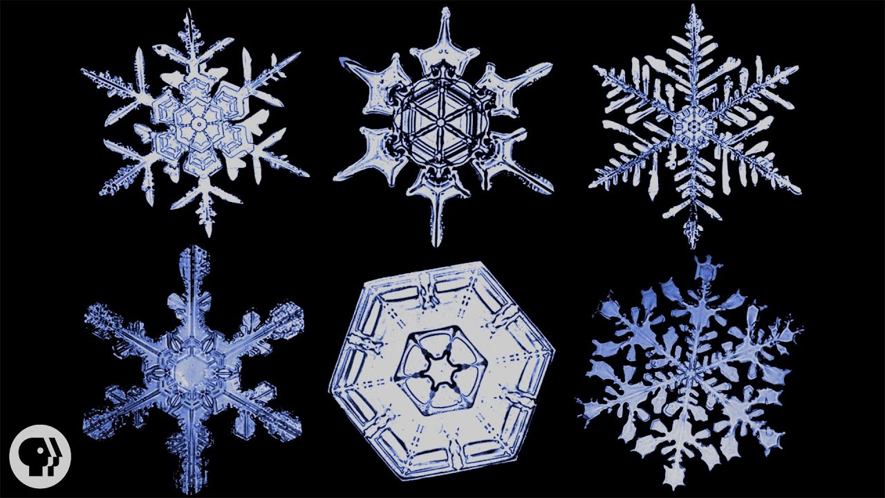 Real Snowflakes Falling Wallpaper The Science Of Snowflakes Youtube