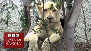 Зоопарк Тбилиси открыли после наводнения - BBC Russian