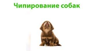 Чипирование собак. Ветеринарная клиника Био-Вет.
