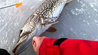 Зимняя рыбалка на жерлицы! Трофейные щуки рвут леску и не лезут в лунку!!! Вот это улов!