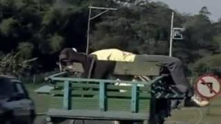 Homem é conduzido por carroça