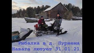 Ловля наваги на Белом море дер Пурнема