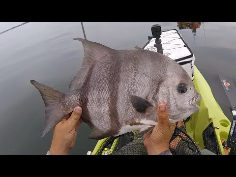 SUMMER INSHORE REEF CATCH & COOK:  Spanish Mack Ceviche, Sheepshead, Spadefish
