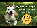 Try Not To Laugh! Funny Dancing Dogs Video Compilation