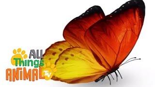 BUTTERFLIES Animals for children. Kids videos. Kindergarten Preschool learning