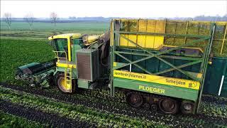 Ploeger MKC   2TR  Boerenkool oogsten  Borecole Harvest  GrГјnkohlernte  2018