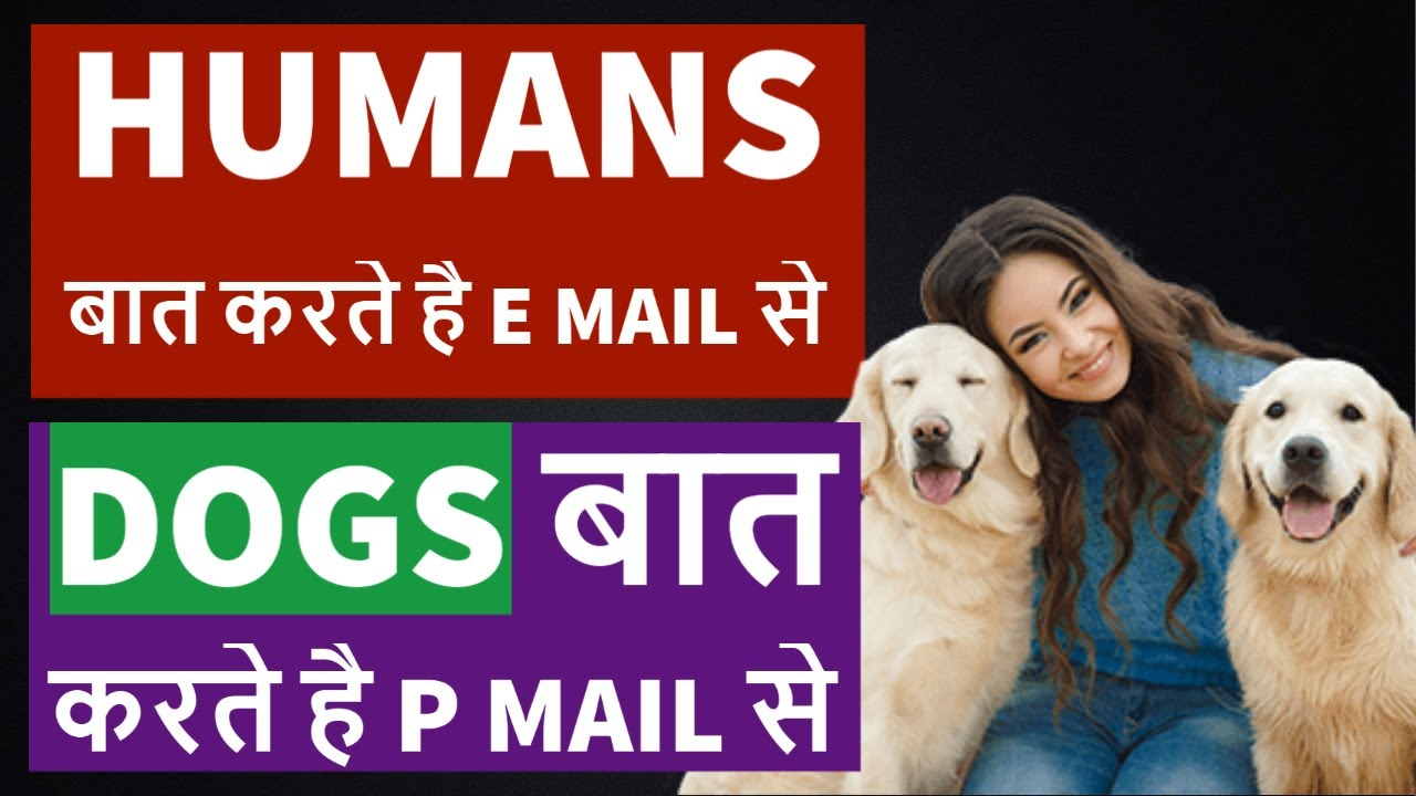 How Dogs Communicate Through P mail   Dogs and Pets   TUC
