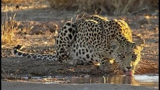 Repeat youtube video Djuma Game Reserve Waterhole - Live Cam